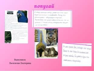 попугай Выполнила Васильчак Екатерина