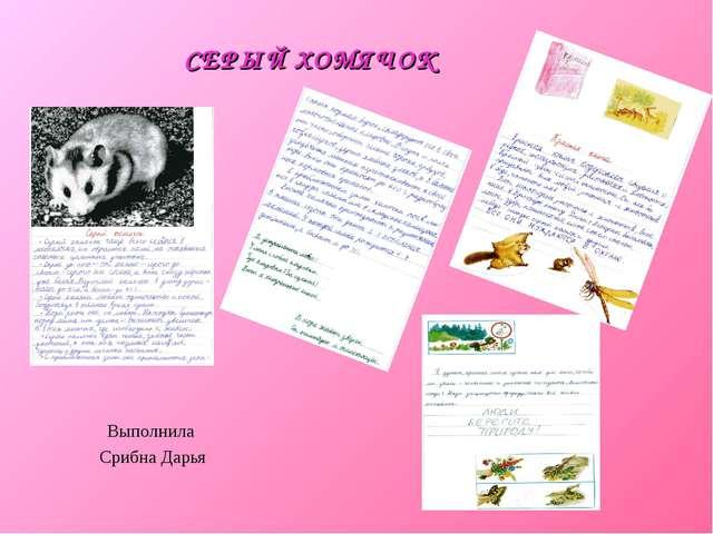 СЕРЫЙ ХОМЯЧОК Выполнила Срибна Дарья