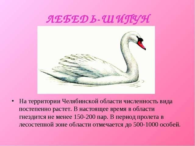 ЛЕБЕДЬ-ШИПУН На территории Челябинской области численность вида постепенно ра...