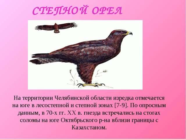 СТЕПНОЙ ОРЕЛ На территории Челябинской области изредка отмечается на юге в ле...