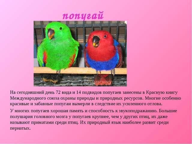 попугай На сегодняшний день 72 вида и 14 подвидов попугаев занесены в Красную...