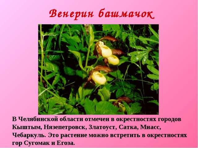Венерин башмачок В Челябинской области отмечен в окрестностях городов Кыштым,...