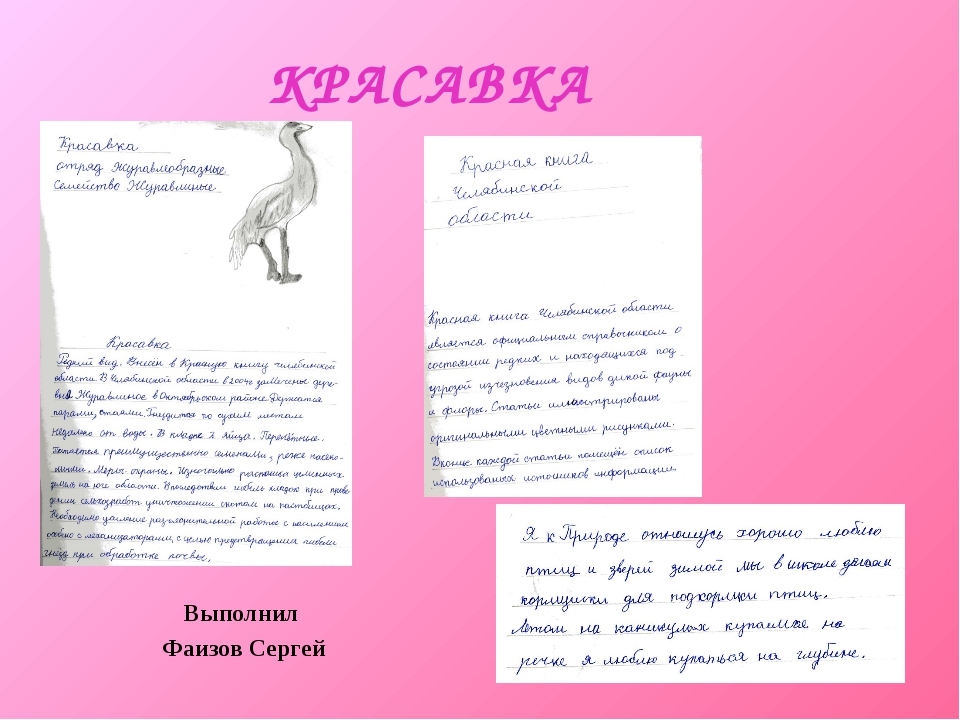 КРАСАВКА Выполнил Фаизов Сергей