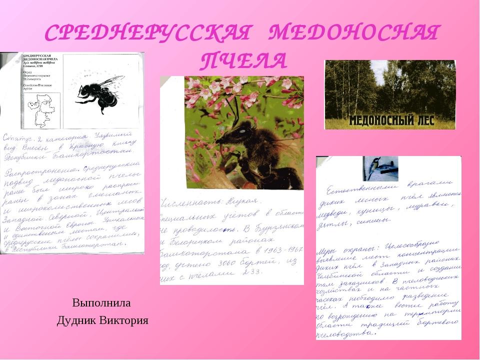 СРЕДНЕРУССКАЯ МЕДОНОСНАЯ ПЧЕЛА Выполнила Дудник Виктория