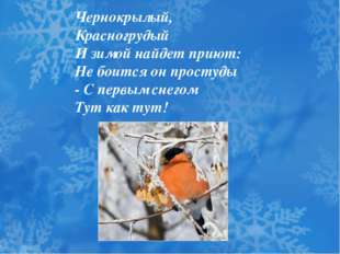 Чернокрылый, Красногрудый И зимой найдет приют: Не боится он простуды - С пер