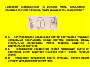 Назовите изображённые на рисунке типы соединения костей в скелете человека. К
