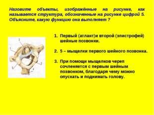 Назовите объекты, изображённые на рисунке, как называется структура, обозначе