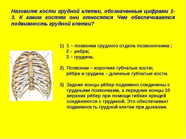 Назовите кости грудной клетки, обозначенные цифрами 1-3. К каким костям они о...