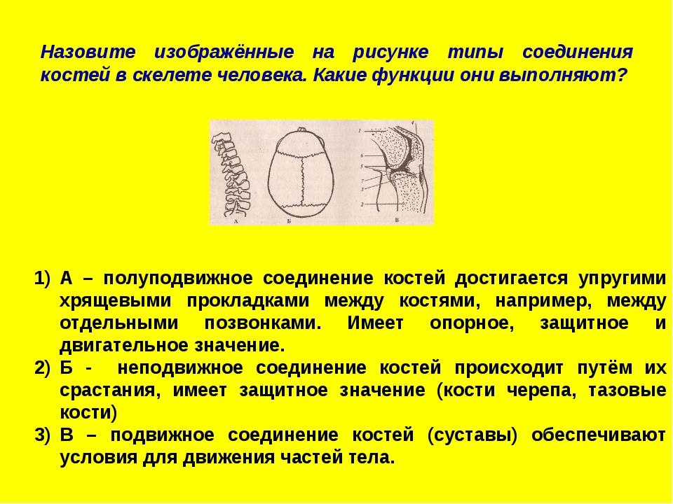 Назовите изображённые на рисунке типы соединения костей в скелете человека. К...