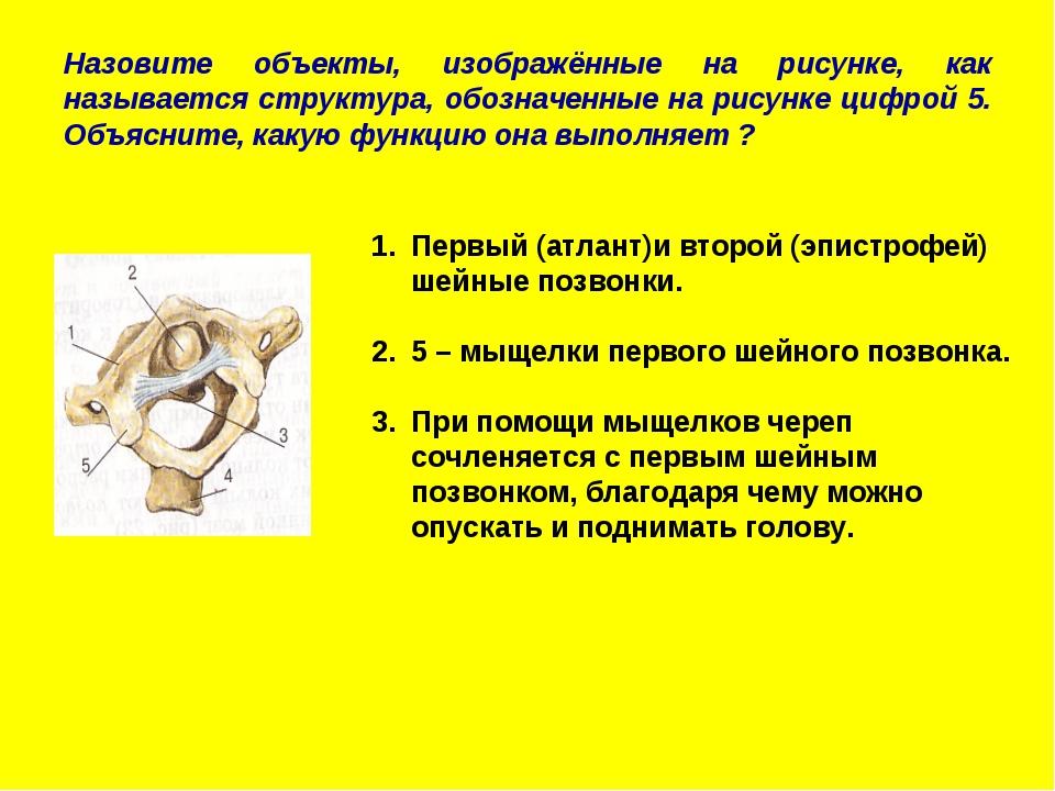 Назовите объекты, изображённые на рисунке, как называется структура, обозначе...