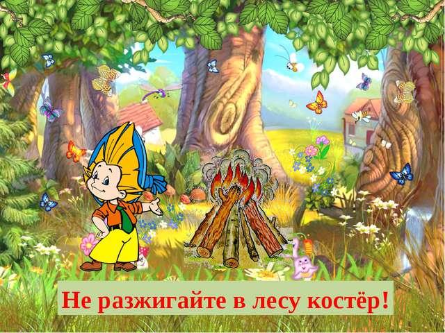 Не разжигайте в лесу костёр!
