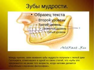 Зубы мудрости. Между прочим, свое название зубы мудрости получили с легкой ру