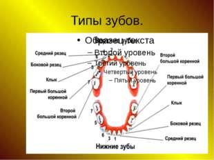 Типы зубов.