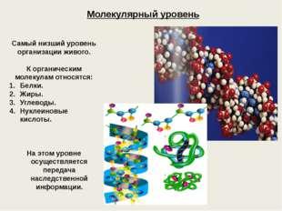 Молекулярный уровень Самый низший уровень организации живого. К органическим