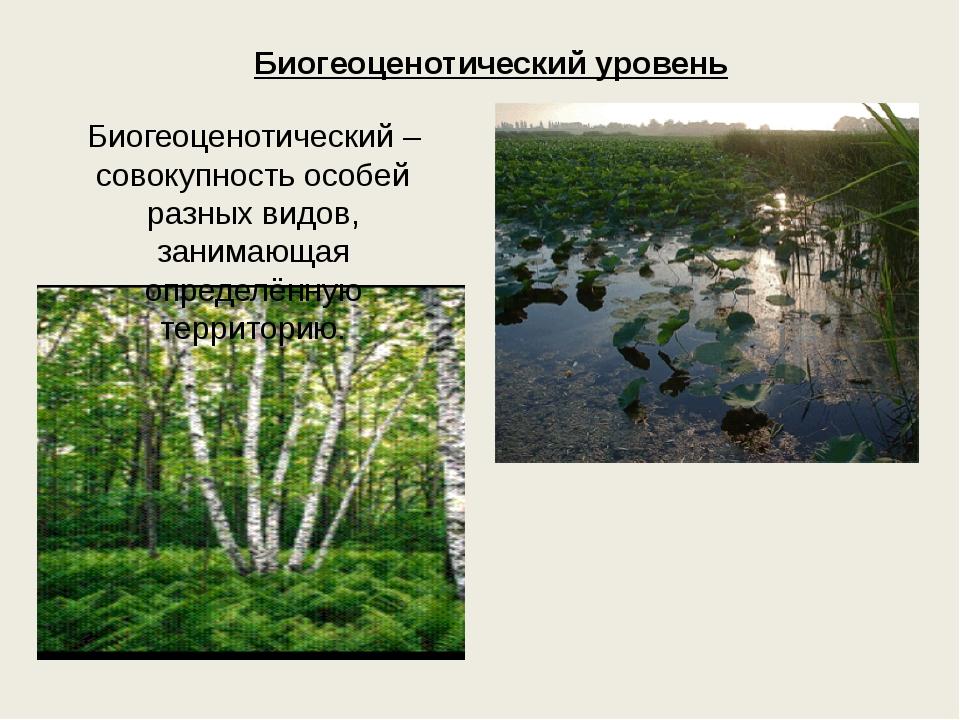Биогеоценотический уровень Биогеоценотический – совокупность особей разных ви...
