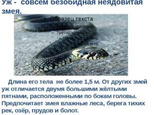 Уж - совсем безобидная неядовитая змея. Длина его тела не более 1,5 м. От дру