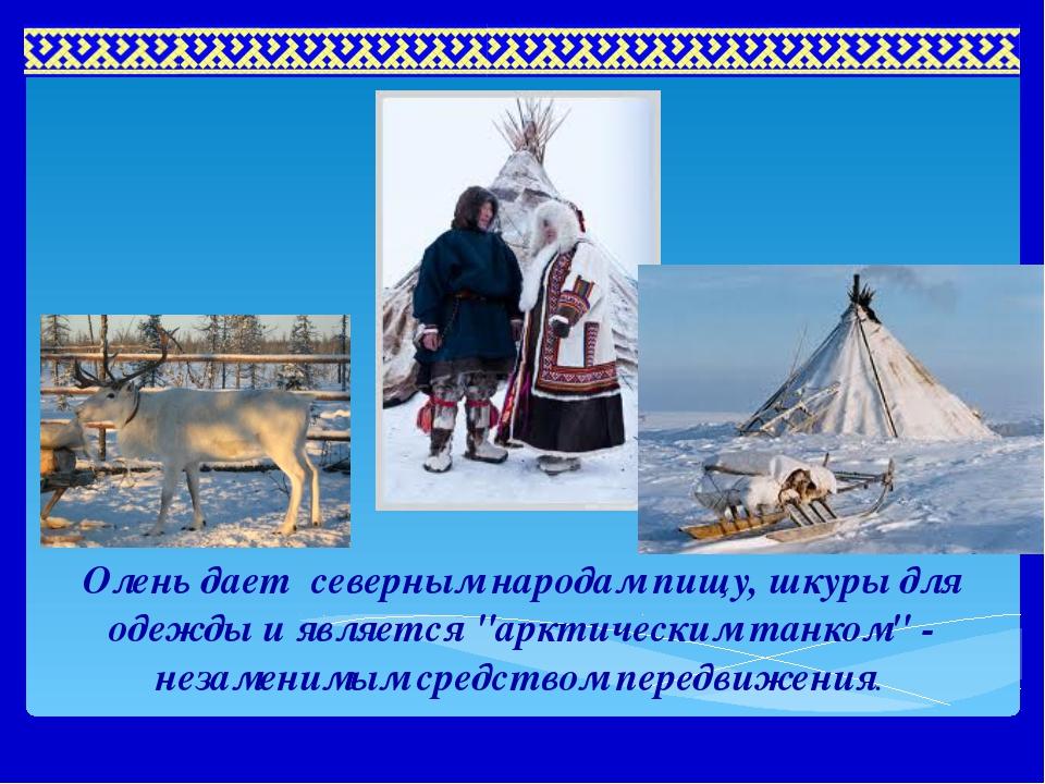"""Олень дает северным народам пищу, шкуры для одежды и является """"арктическим т..."""