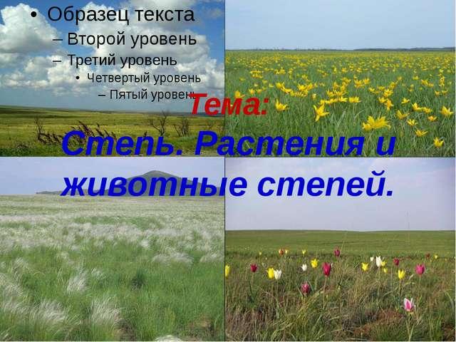 Урок презентация по окружающему миру для класса Степь  Тема Степь Растения и животные степей