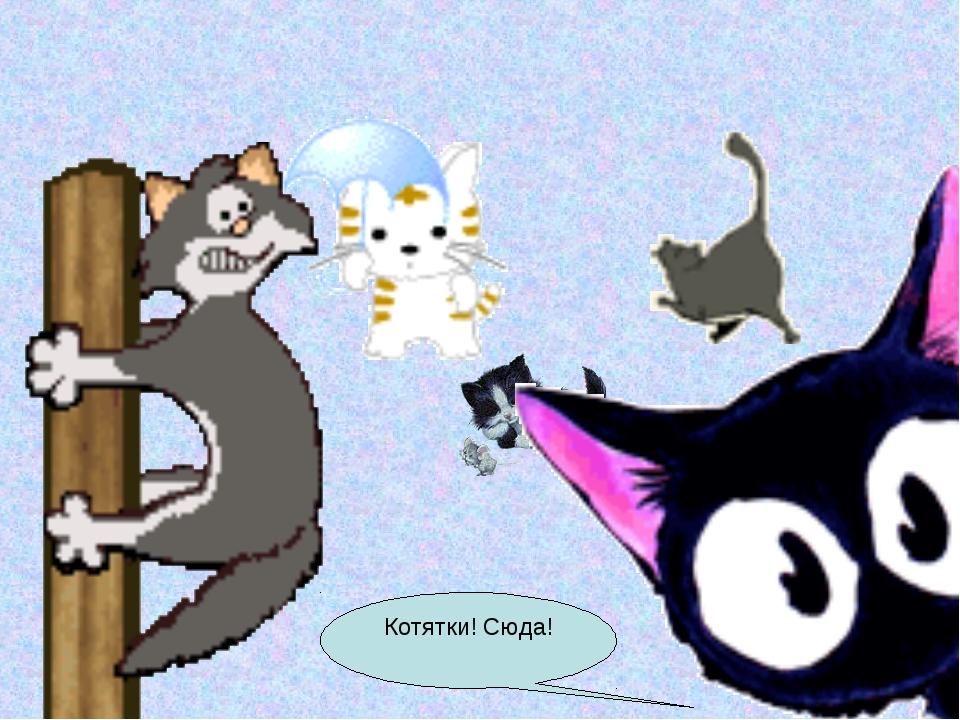 Котятки! Сюда!