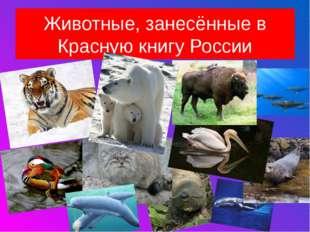 Животные, занесённые в Красную книгу России