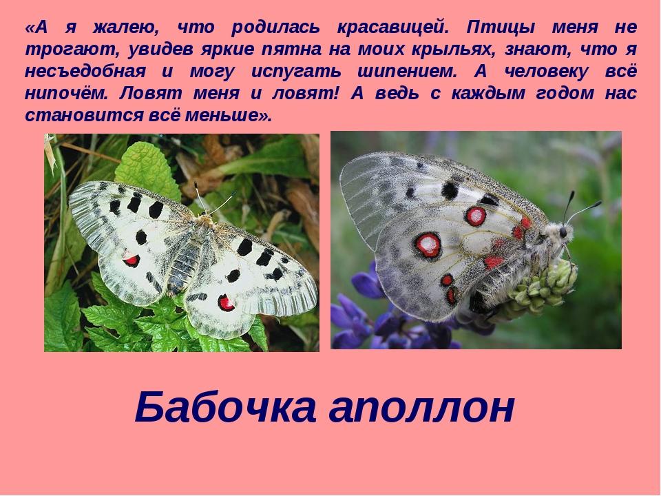 «А я жалею, что родилась красавицей. Птицы меня не трогают, увидев яркие пятн...