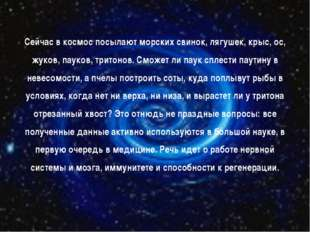 Сейчас в космос посылают морских свинок, лягушек, крыс, ос, жуков, пауков, тр