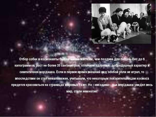 Отбор собак в космонавты был не менее жестким, чем позднее для людей. Вес до...