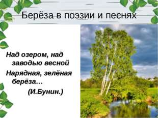 Берёза в поэзии и песнях Над озером, над заводью весной Нарядная, зелёная бер