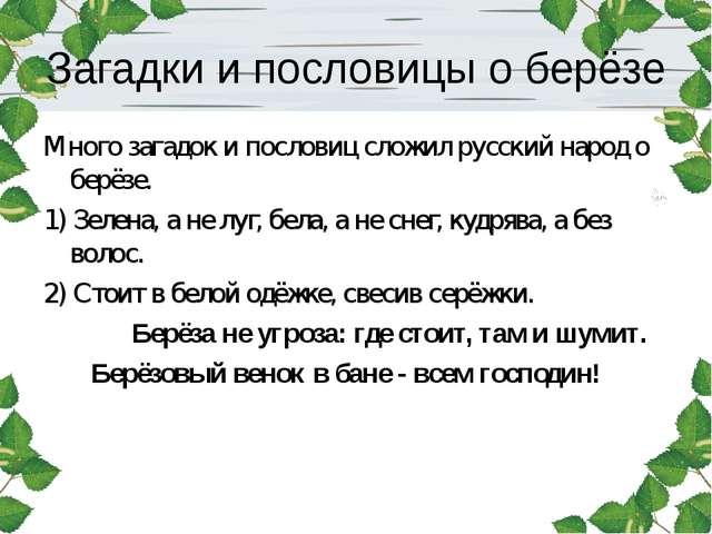 Загадки и пословицы о берёзе Много загадок и пословиц сложил русский народ о...