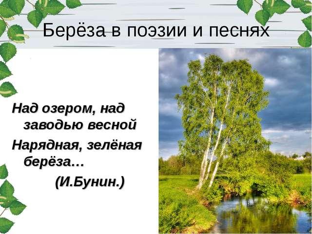 Берёза в поэзии и песнях Над озером, над заводью весной Нарядная, зелёная бер...
