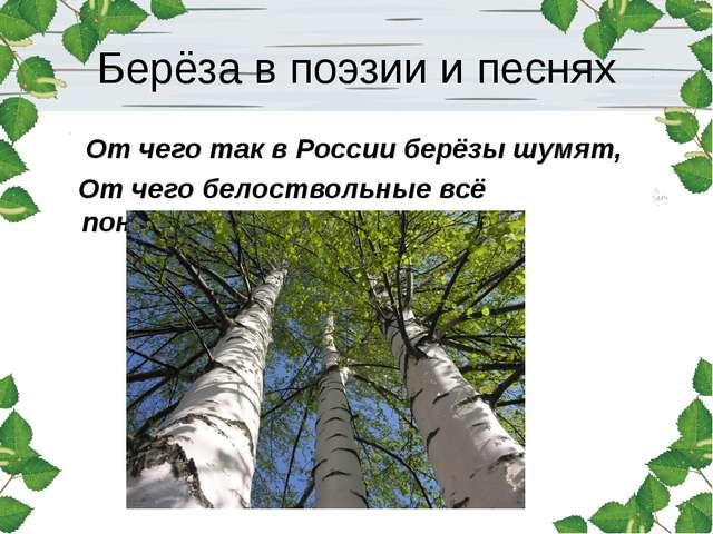 Берёза в поэзии и песнях От чего так в России берёзы шумят, От чего белоствол...
