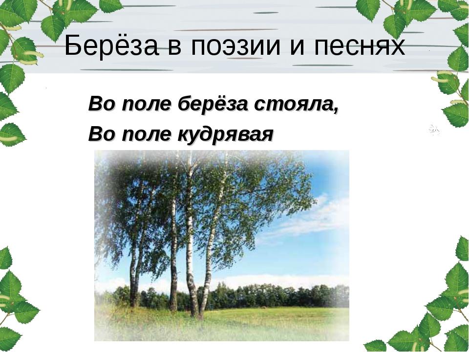 Берёза в поэзии и песнях Во поле берёза стояла, Во поле кудрявая стояла…