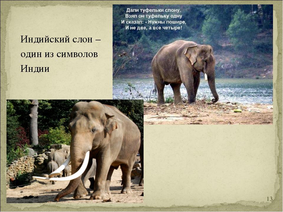 Индийский слон – один из символов Индии *
