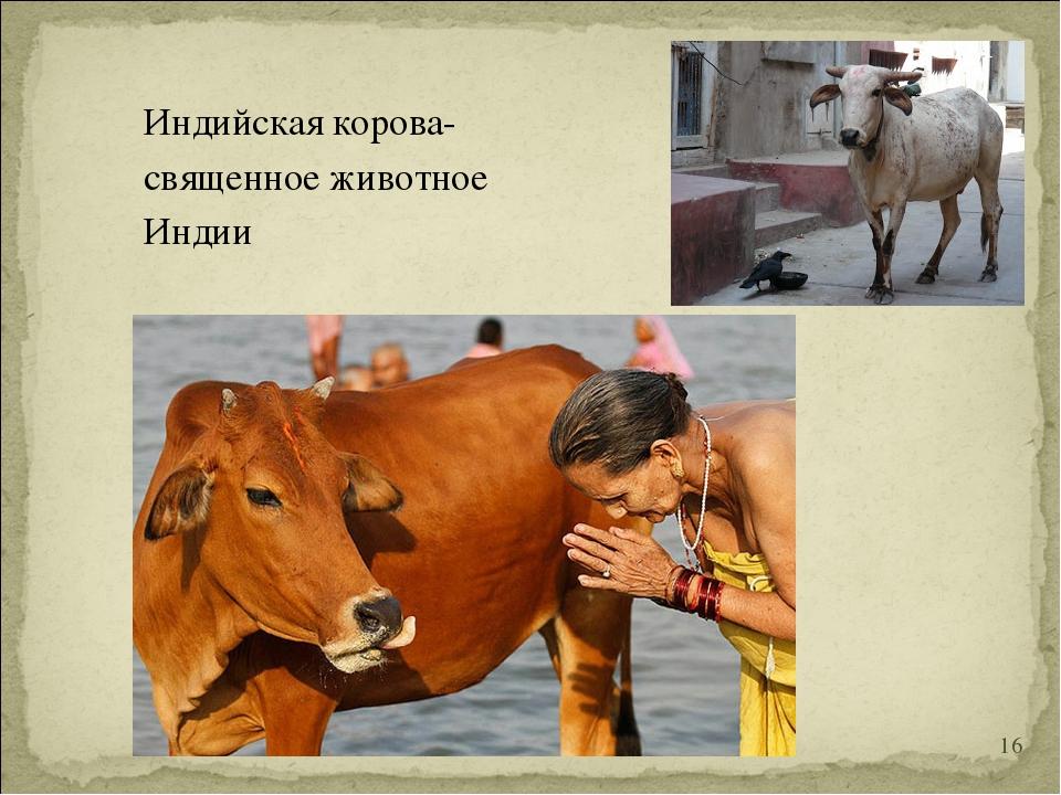 Индийская корова- священное животное Индии *