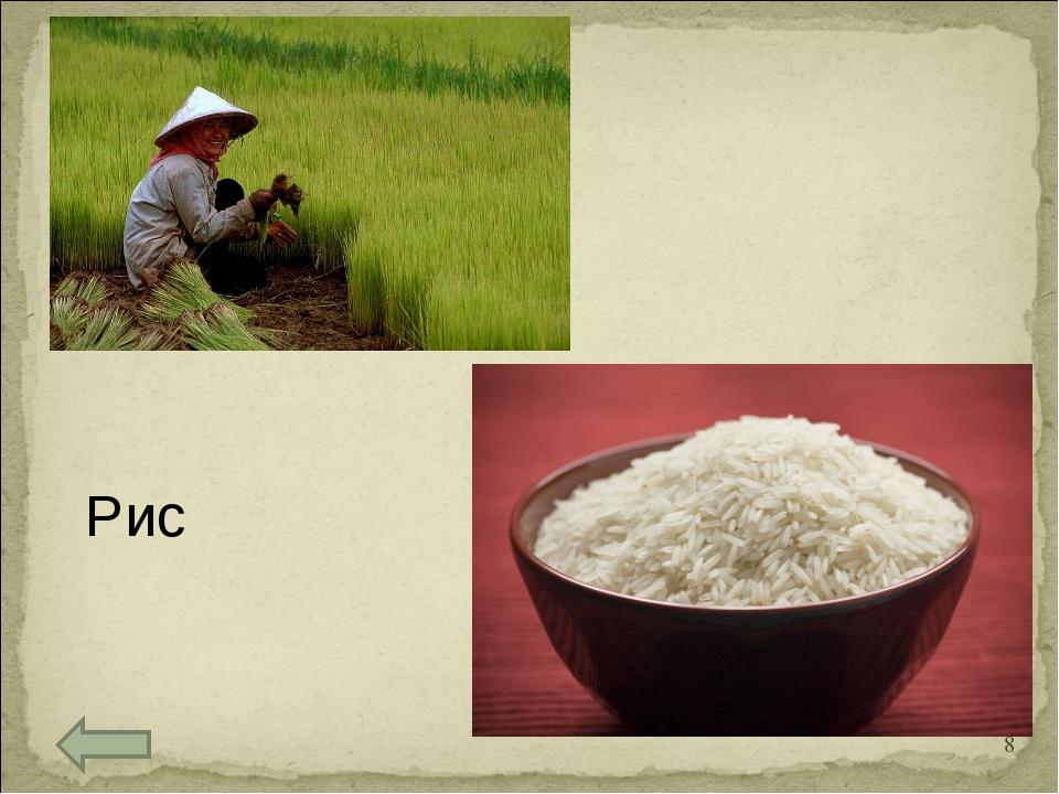 Рис *