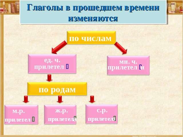 прилетел  прилетел  и Глаголы в прошедшем времени изменяются с.р. прилетел...