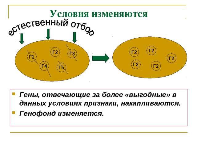 Условия изменяются Гены, отвечающие за более «выгодные» в данных условиях при...