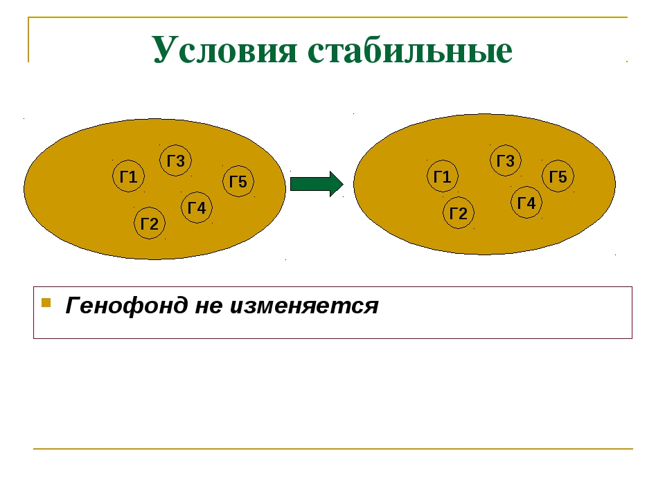 Условия стабильные Генофонд не изменяется Г1 Г3 Г2 Г4 Г5 Г5 Г4 Г3 Г1 Г2