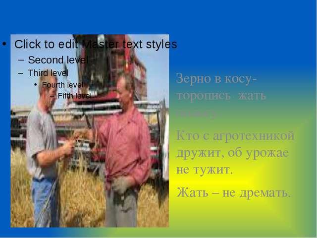 Зерно в косу- торопись жать полосу. Кто с агротехникой дружит, об урожае не т...