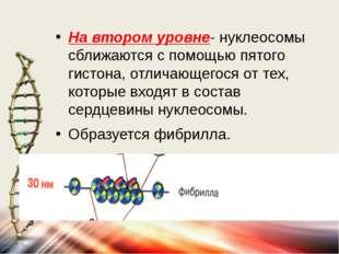 На втором уровне- нуклеосомы сближаются с помощью пятого гистона, отличающего