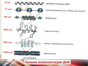 Уровни комплектации ДНК