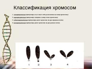 Классификация хромосом 1- телоцентрическая (центромера отсутствует либо распо