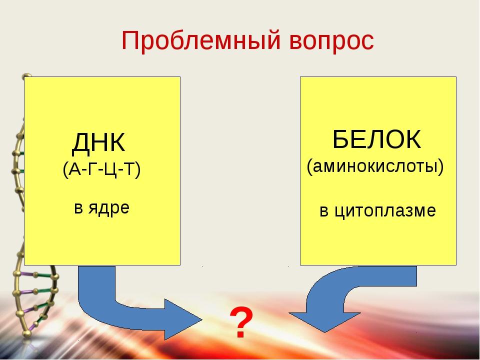 ДНК (А-Г-Ц-Т) в ядре БЕЛОК (аминокислоты) в цитоплазме ? Проблемный вопрос