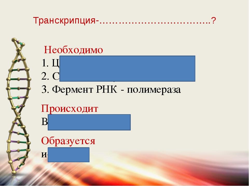 Транскрипция-……………………………..? Необходимо 1. Цепь ДНК - матрица 2. Свободные нук...