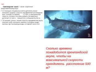 №8. Гренландская акула – самая медленная представительница акул. «С помощью