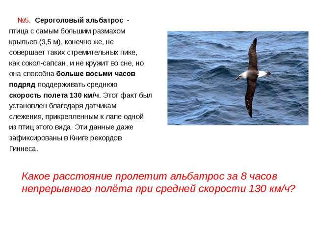 №5. Сероголовый альбатрос - птица с самым большим размахом крыльев (3,5 м),...