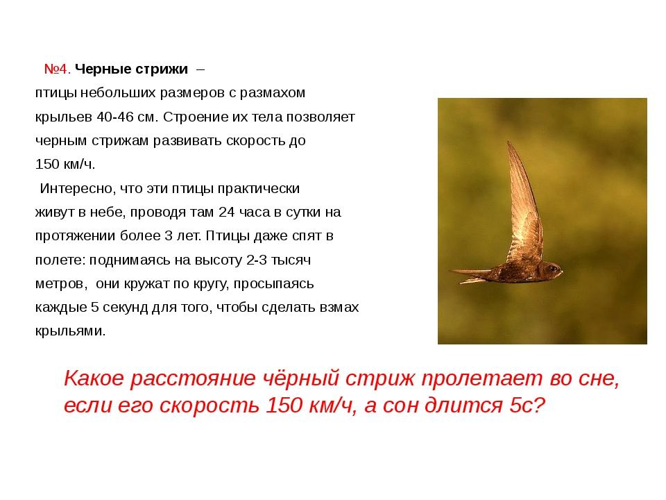 №4. Черные стрижи – птицы небольших размеров с размахом крыльев 40-46 см....
