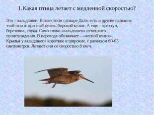 1.Какая птица летает с медленной скоростью? Это – вальдшнеп. В известном слов