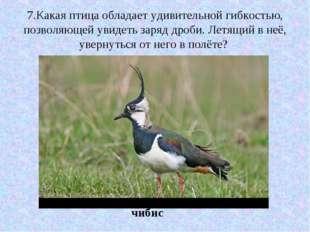 7.Какая птица обладает удивительной гибкостью, позволяющей увидеть заряд дроб
