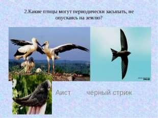 2.Какие птицы могут периодически засыпать, не опускаясь на землю? Аист чёрный